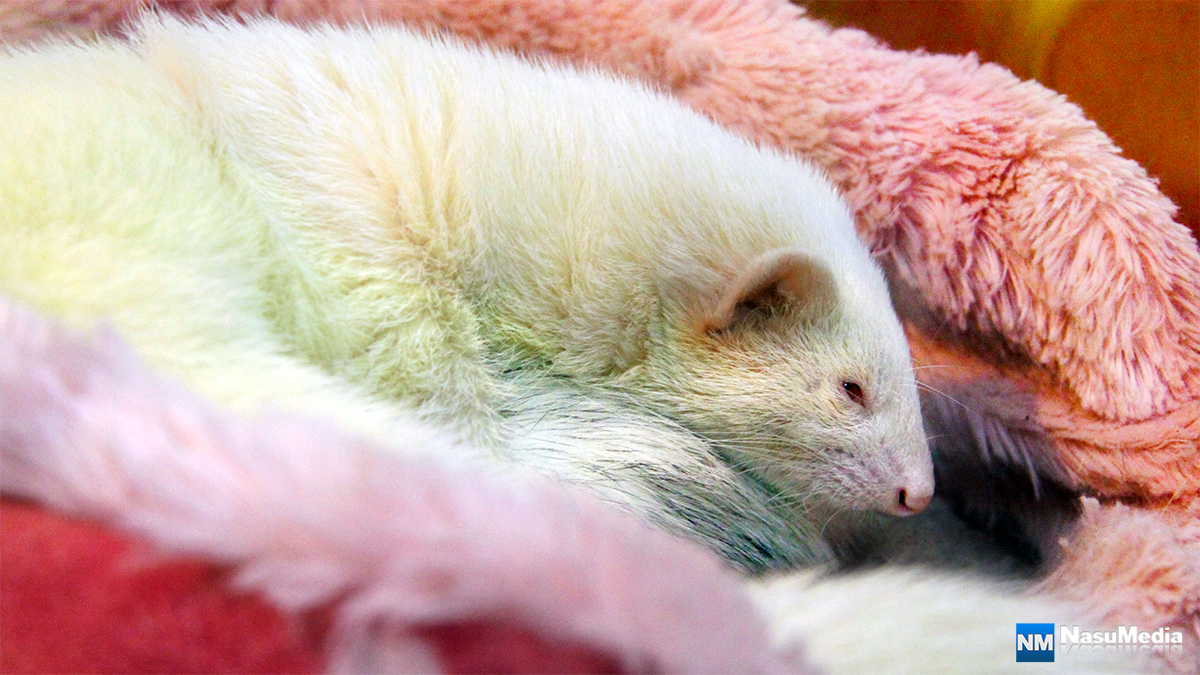 small-animal-house_ferret