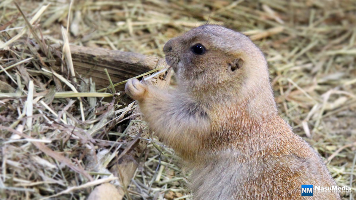small-animal-house_prairie-dog01