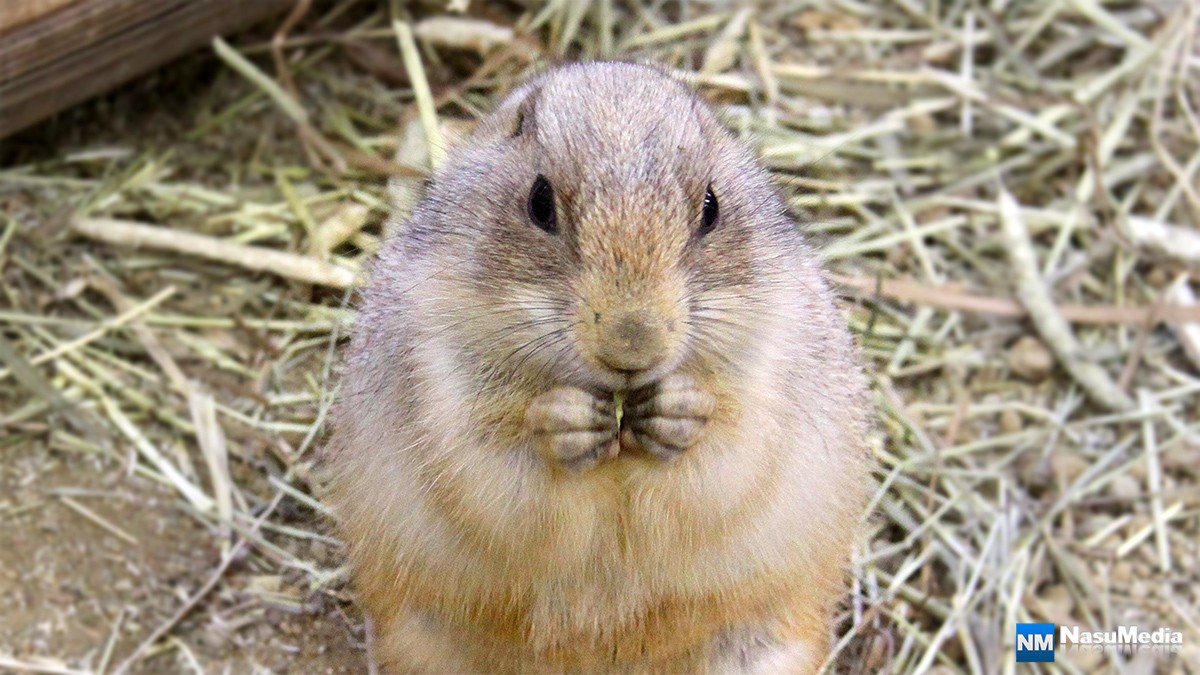 small-animal-house_prairie-dog02