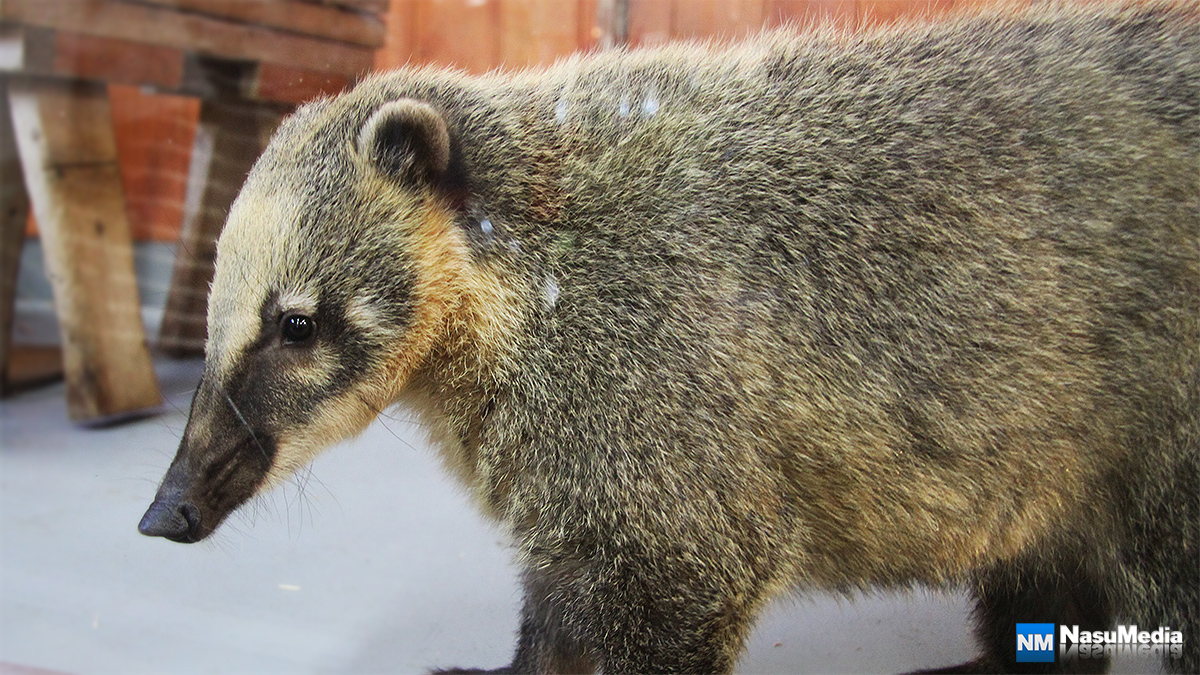 small-animal-house_south-American-coati